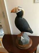 Rare Tufted Puffin Decorative Wood Decoy Hand Carved And Painted