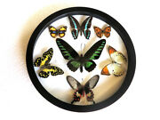 New Real Butterfly Wood Round Framed Display Insect Taxidermy Collection Art 2