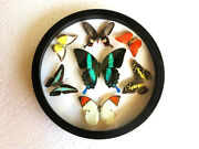 New Real Butterfly Wood Round Framed Display Insect Taxidermy Collection Art 4