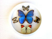 New Real Butterfly Wood Round Framed Display Insect Taxidermy Collection Art 5