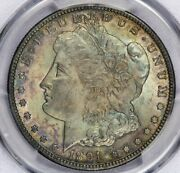 1891-cc 1891 Morgan Dollar Pcgs Ms64 Cac Handsomely Toned So Nice