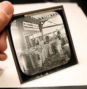 Grimsby Fish Packing Shed Antique Photo Magic Lantern Slide 2203