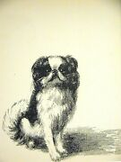 Cleanthe Cute Japanese Spaniel 1933 Dog Art Print Matted