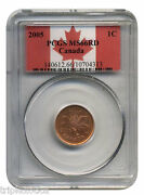 2005 Pcgs Ms-66 Rd Canadian One Cent Rare High Grade Registry Set Coin