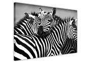 African Zebra Family Framed Pictures Animal Canvas Wall Art Prints Deco Posters