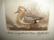 Pair Vintage Colored Etchings Ducks Blue-winged Teal Green-winged Teal Signed