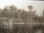 Antique 1930s Duck Call Dynasty Blind Hunting Decoys Artistic Lake Country Photo