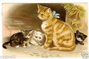 Postcard Cat With Three Kittens Unsigned Helena Maguire