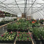 New 24 X 32 Ft. Greenhouse Kit Four Season 12 Ft Ceiling Free Shipping T-t