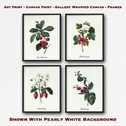 Red Berries Print Set Of 4 - Group Of 4 Botanical Prints - Kitchen Wall Art