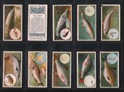 Tobacco Cards Set Cigarette Cards Fish And Bait 1910 Pike Mackerel Tenchtrout