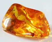 Genuine Baltic Amber Polished Nugget Insect Inclusion Rare Specimen 72 Ct 14 Gr