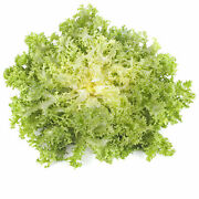 Endive Seeds - Frisse -farm And Garden Vegetable Gardening And Microgreens, Heirloom