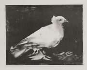 Pablo Picasso Pigeon Poster On Canvas