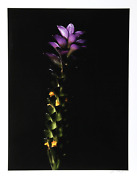 Jonathan Singer Green To Purple Digital Photograph On Wove Paper Signed And N