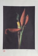 Jonathan Singer, Heliconia From Botanica Magnifica, Digital Photograph On Japon
