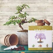 Grow 4 Types Of Bonsai Trees From Seed In/out Tree Seeds Soil Pots Lables Guide