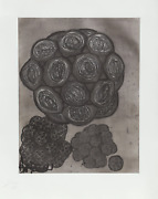 Terry Winters, Album 6, Etching With Aquatint, Signed And Numbered In Pencil