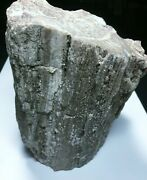 Large Piece Of Petrified Wood 9 1/2 Lbs With Bark Gray And White