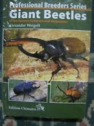 Giant Beetles Of Genus Dynastes And Magasoma By Weigelt Brand New