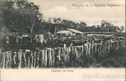 Argentina Cattle In Corral Postcard Vintage Post Card