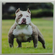 Set Of 4 - Natural Stone Ceramic Tile Marble Drink Coasters - Dogs 4 E