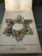 Antique Dried Flowers From Jerusalem Olivewood Binding Flowers From The Holyland