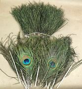 Fly Fishing Tying Lot Peacock Herl Feathers Genuine 11 Eyes + Herl Lot 1oz