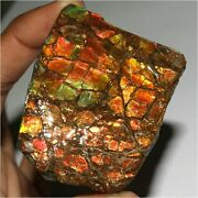 382.35cts Exclusive Natural Red Power Ammolite Fossil Mineral Rough Raw Gemstone