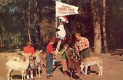 Florida's Silver Springs Tommy Bartlett's Deer Ranch Children Pet And Feed Deer
