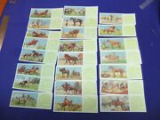 Tea Cards Typhoo Horses From 1935 Trade Collectors Cards Advert Advertising