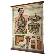 Vintage Medical Anatomical Elementary Physiology Chart Poster Early Arnold No 5