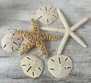 Group Of 2 Starfish And 4 Sand Dollars 6 Pieces Total 393