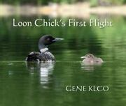 Loon Chick's First Flight By Gene Klco