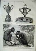 Old Antique Print 1860 Red Howling Monkeys Zoological Vase Grant Pearse 19th