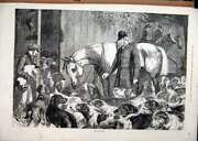 Original Old Antique Print 1875 Hunting Frost Dogs Horse Man Stable Victorian