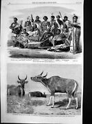 Old Print Native Chiefs New Zealand Wild Ox Pegu Zoological Gardens 1863 19th