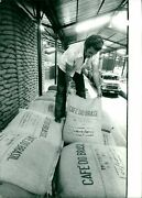 Coffee In Brazil. Sacks Of Coffee Beans Stored... - Vintage Photograph 7003867