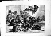 Original Old Antique Print Whitsuntide Holidays Dinner At Zoo Monkeys 1875 19th