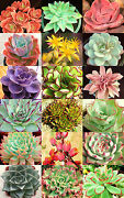 Echeveria Variety Mix Rare Exotic Hens And Chicken Succulent Flower Seed 100 Seeds