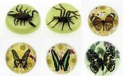 Real Bug Round Paperweight. 6 To Choose From