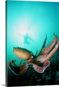 Canada British Columbia Giant Pacific Canvas Wall Art Print Wildlife Home