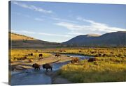 Bison Herd In The Lamar Valley Of Canvas Wall Art Print Wildlife Home Decor