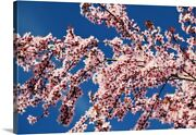 Cherry Blossoms On A Tree In Spring Canvas Wall Art Print Tree Home Decor