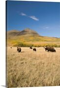 American Bison Southern Alberta Canada Canvas Wall Art Print Wildlife Home