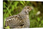 Blue Grouse Mount Maxwell Provincial Canvas Wall Art Print Bird Home Decor