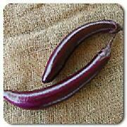 Eggplant Pingtung Long 250 Seeds