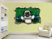Pug Dog As Personal Trainer Photo Hole In Wall Sticker Wall Mural 31536726