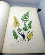 A Century Of Ferns - First Edition 1854 Hooker William Jackson 100 Hc Lithogr
