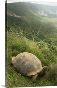 Galapagos Giant Tortoise On Rim Of Canvas Wall Art Print, Reptile Home Decor